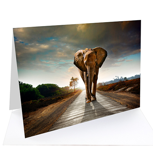 Fotospeed Fotocards - Platinum Gloss Art Fibre 300 - Greetings Cards - 300gsm - A6 x 20 Cards - 7E055C